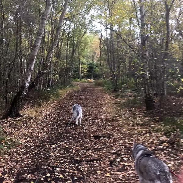 Mit den Huskies im Venner Moor